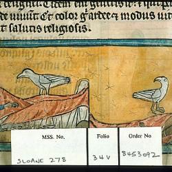 Харадр (Рукопись Британской библиотеки Sloane 278, fol. 34v)