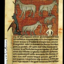 Слоны, дракон и мандрагора (Рукопись Британской библиотеки Sloane 278, fol. 48v)