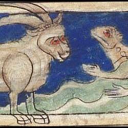 Бонакон. Рукопись Британской библиотеки (MS Sloane 3544, fol. 7r.)