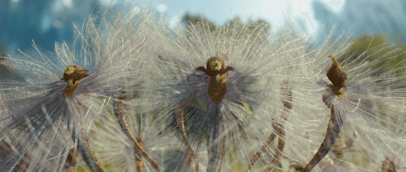 spiderwick chronicles игра прохождение видео