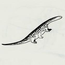 Тиритчик. Рисунок Тельмы Вебстер из словаря инупиак