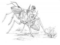 Абатва. Рисунок Стивена Плеера