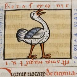 Аист. Иллюстрация из рукописи, хранящейся в Большой семинарии Брюгге