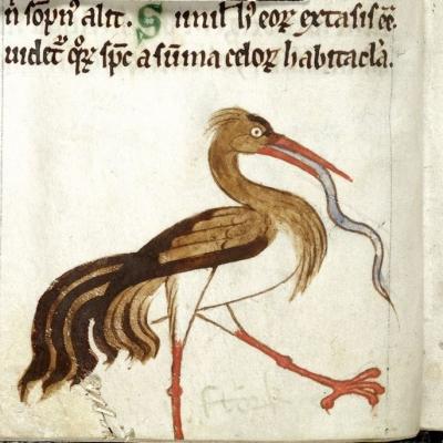 Аист. Рукопись Британской библиотеки (Royal MS 13 B VIII, fol.9v.)