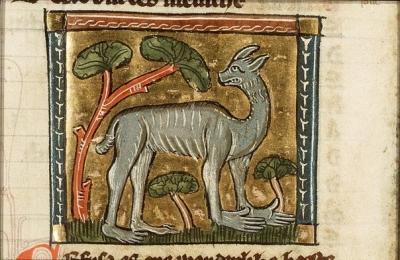 """Кефуза из манускрипта Якоба ван Маэрланта """"Цветы природы"""""""