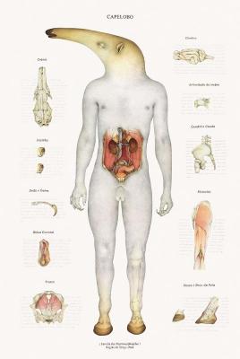 Анатомический рисунок капелобо за авторством Вальмора Корреа