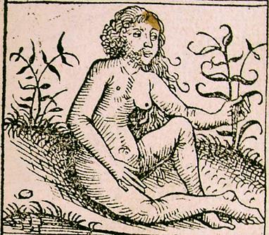 Андрогин-андрони на иллюстрации к нюренбергской хронике 1493 года