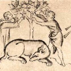 Asp (как собака) из рукописи Британской библиотеки (Royal MS 2 B. vii)
