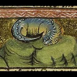 Asp из фландрской рукописи, 1450-1500