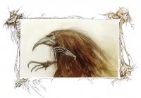 Черная Аннис. Иллюстрация Брайана Фрауда