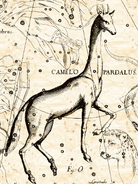 Camelopardus из атласа Яна Гевелия