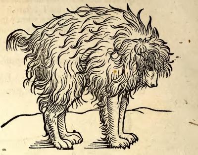 Мимик или гетулийский пёс. Гравюра, до 1553 года