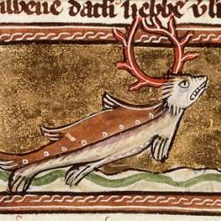 Морской олень. Иллюстрация из рукописи Национальной Нидерландской библиотеки