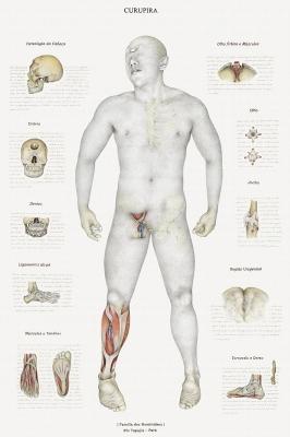 Анатомический рисунок курупира за авторством Вальмора Корреа