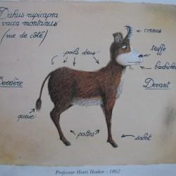 Даху, вид в профиль. Иллюстрация Патрика Леруа