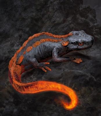Саламандра. Иллюстрация Дениса Руцкого