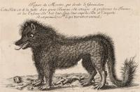 Гравюра, изображающая Жеводанского зверя с объявленной за его голову наградой в 2700 франков (1765)