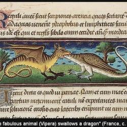 Гадюки. Иллюстрация из бестиария Национальной Нидерландской библиотеки