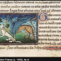Грифон. Иллюстрация из бестиария Национальной Нидерландской библиотеки
