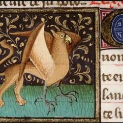 Амьенский грифон. Изображение из средневекового бестиария