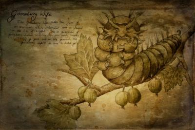 Крыжовничная женушка. Рисунок Джессики Хилтон