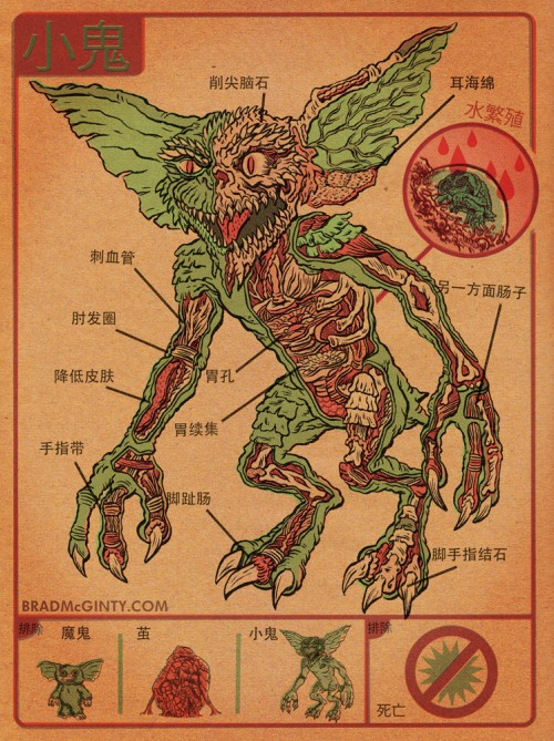 анатомия в иллюстрациях: