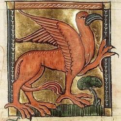 Красный грифон. Изображение из средневекового бестиария