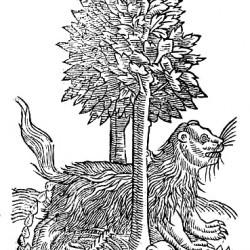 """Гулон. Иллюстрация из книги Эдварда Топселла """"История четвероногих животных"""""""