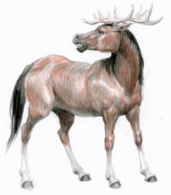 Гиппоцерв (Hippocervus). Иллюстрация Дениса Гордеева к бестиарию Сапковского