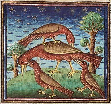 Удод из рукописи Национальной Нидерландской библиотеки (Hague, MMW, 10 B 25, Folio 32r)