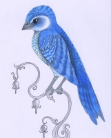 Болтрушайка. Рисунок от Verreauxi Aquilae (verreaux)
