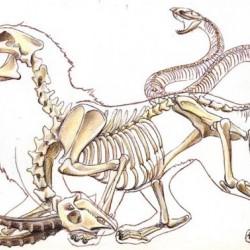 Скелет химеры. Карандашный рисунок
