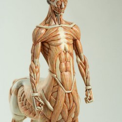 Кентавр. Анатомическая скульптура Масао Киношиты