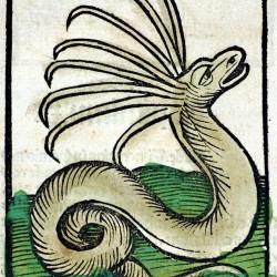 Кераст. Гравюра из Hortus Sanitalis (1491)