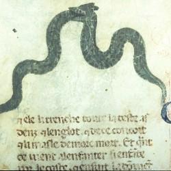 Совокупляющиеся через рот гадюки (Рукопись Моргановской библиотеки Manuscript. M.459, fol.7r)