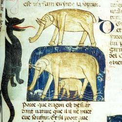 Дракон и слон (Рукопись Моргановской библиотеки Manuscript. M.459, fol.21r)