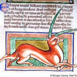 Эал (Рукопись Моргановской библиотеки в Нью-Йорке Manuscript. M.81, fol. 39r.)