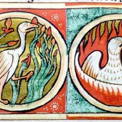 Феникс (Рукопись Моргановской библиотеки в Нью-Йорке Manuscript. M.81, fol. 62v.)