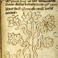 Саламандры, отравляющие фрукты (Рукопись Моргановской библиотеки в Нью-Йорке Manuscript. M.890, fol. 18r.)