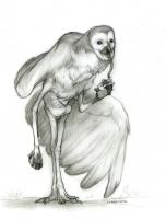 Стикини. Иллюстрация Одри Шутэ