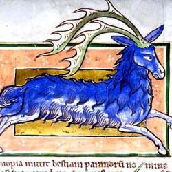 Парандр. (Рукопись Моргановской библиотеки в Нью-Йорке Manuscript. M.81, fol. 39r.)