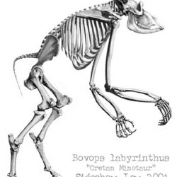 Минотавр. Прорисовка скелета