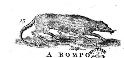 """Ромпо. Гравюра из """"Описания трёхсот животных"""" 1753 года"""