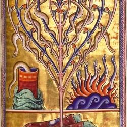 Саламандры из Абердинского бестиария, конец XII века