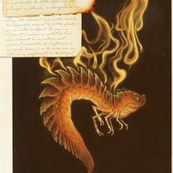 Саламандра. Рисунок Tony Di Terlizzi