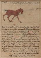 """Шадхавар. Иллюстрация к трактату Аль-Казвини """"Чудеса создания и чудеса существ и странных существующих вещей"""""""