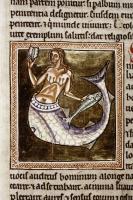 Сирена. Рукопись Бодлеянской библиотеки (MS Ashmole 1511, fol.065v.)