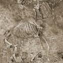 Скелет кентавра-кераста в археологическом раскопе