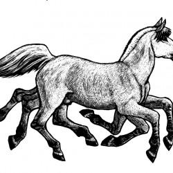 Слейпнир. Иллюстрация Мерли Инсинга