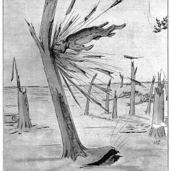 """Кот-расщепенец. Иллюстрация Кёр Дю Буа из книги """"Устрашающие твари промысловых лесов"""""""